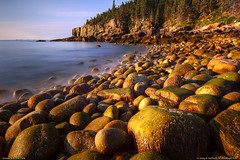 Otter Cliff in Acadia