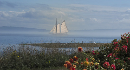 Sailing over the Flowers