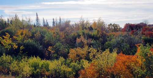 autumn trees fall colours olympus saskatoon saskatchewan omd em5