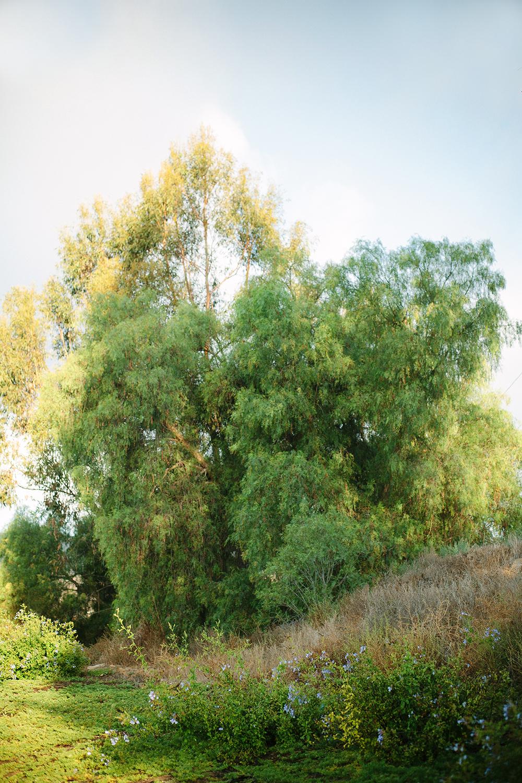 trees_1_web