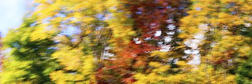 10-13 Fall-8768-Edit-1