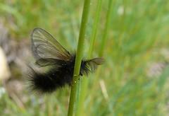 Andorra - Butterflies,Moths & Insects