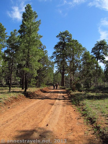 A dirt road through the pines, Grand Canyon National Park, Arizona