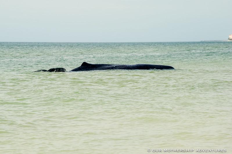 Whale1,2