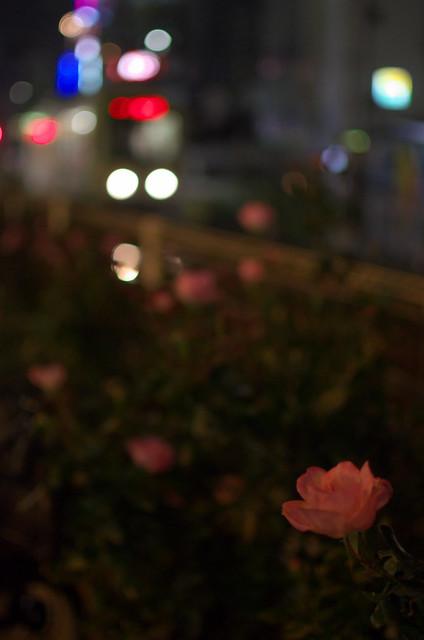 Tokyo Train Story 都電荒川線 2013年11月3日