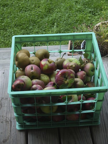 Apples for making apple butter