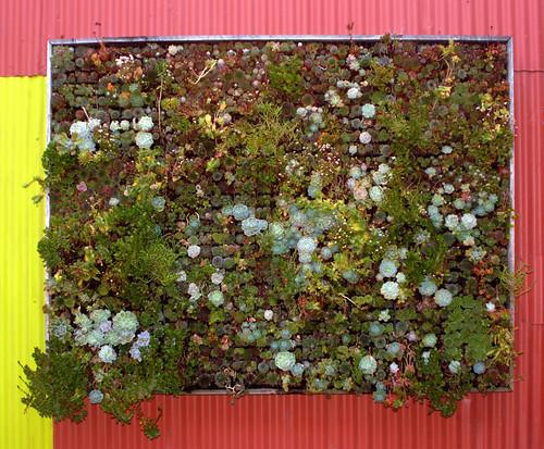 Flora Grubb Vertical Garden Succulents