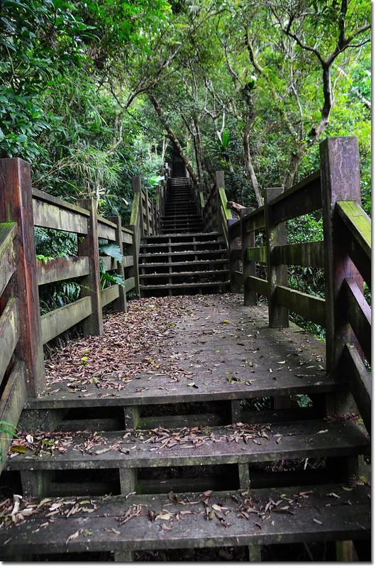帽子山登山步道 5