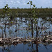 In the Ciénaga de Zapata, the biggest wetlands in the Caribbean. Credit: Jorge Luis  Baños/IPS