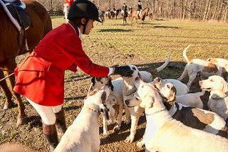Cindy Lamberjack and the hounds with Traders Point Hunt