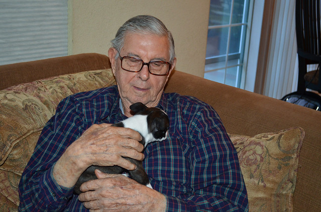 An elderly man sitting on a couch holding a Boston Terrier puppy.