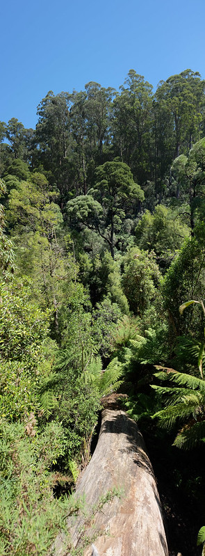 Sherbooke Forest Panorama