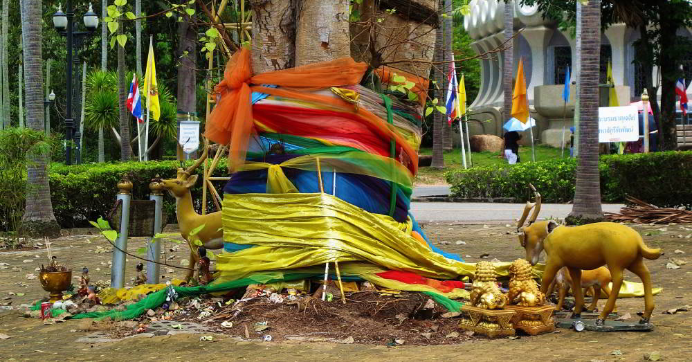 Sacred tree in Thailand