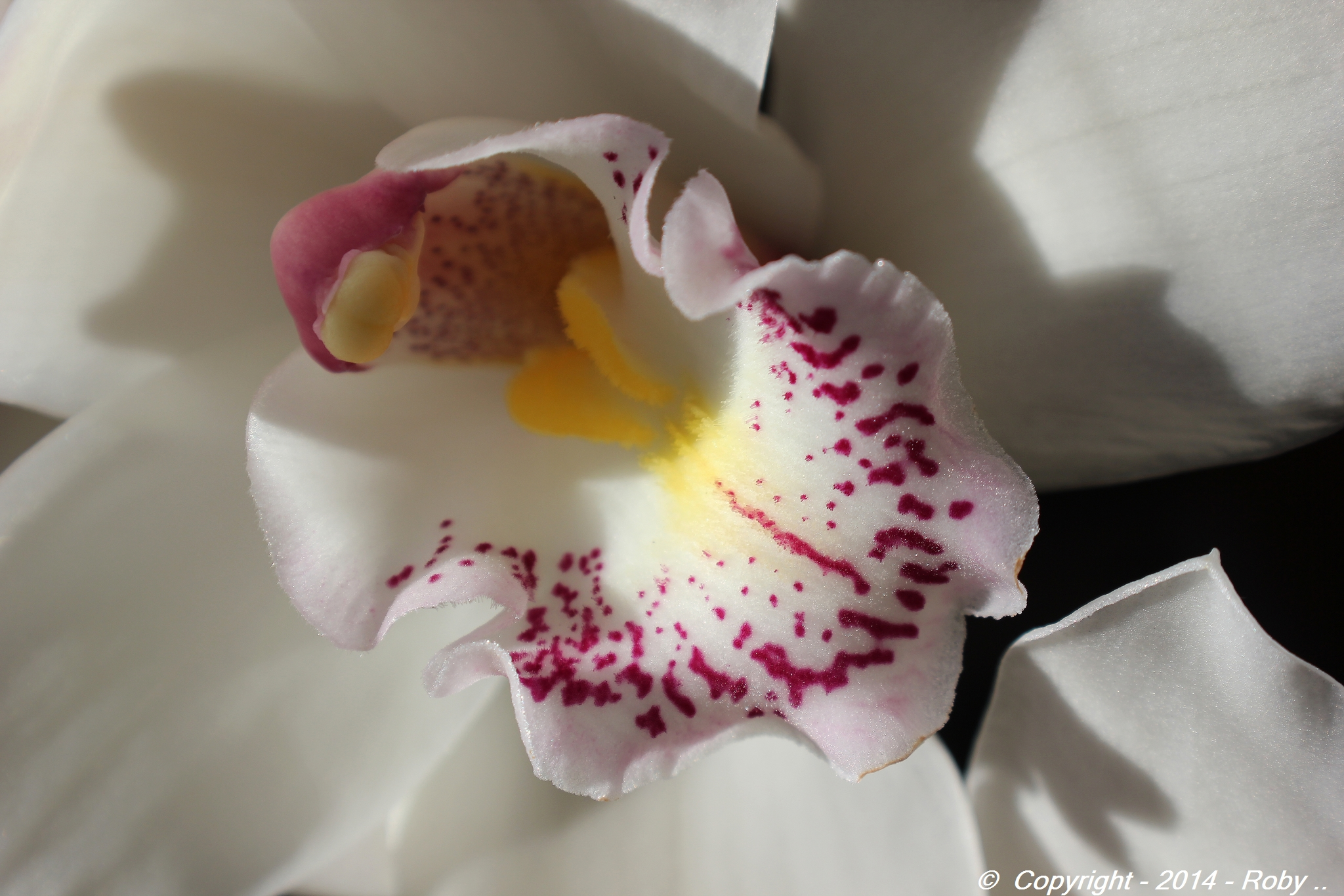 Orchidée -img.Roby.2014