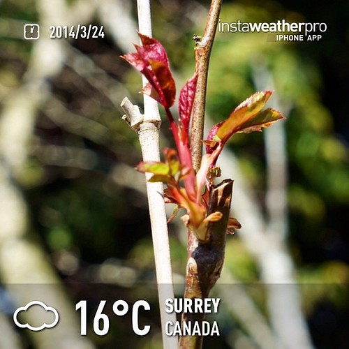 #weather #instaweather #instaweatherpro  #sky #outdoors #nature #world #love #followme #follow #beautiful #instagood #fun #cool #like #life #nice #happy #colorful #photooftheday #amazing #surrey #canada #day #spring #ca ⛅️下午好☕️