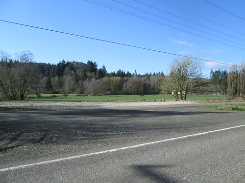 Farm and cows on the Scappoose-Vernonia Highway