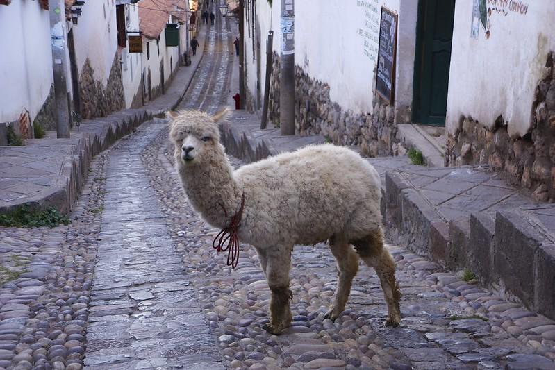 cuzco 84