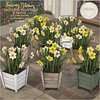 {what next} Spring Bloom Daffodil Planters for Fifty Linden Friday