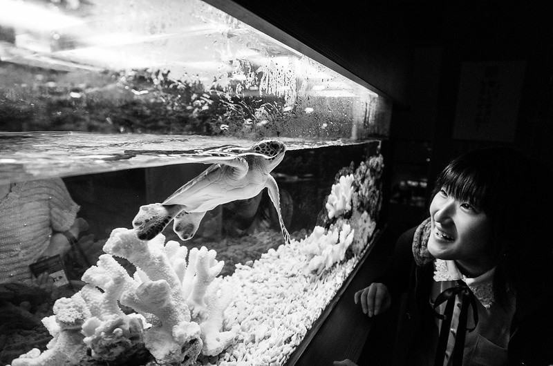 A girl staring at amazement at a turtle in Sumida Aquarium, Tokyo
