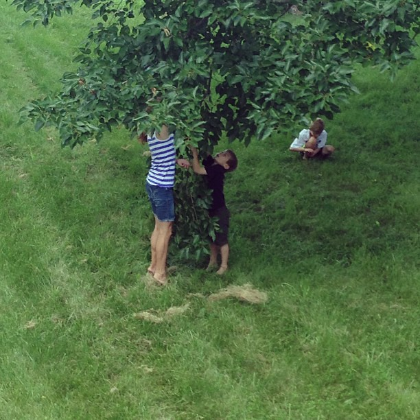 Picking mulberries--an unexpected loveliness of our new home.