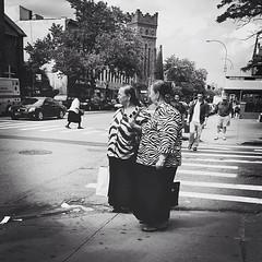 •Safari• #aroundthehood #parkslope #Brooklyn #iamakittehcouch #brooklynstagram #brooklynpoets #sidewalkstories #igersofbk #nybynewyorkers #made_in_ny #emotion_daily #icapture_nyc #rsa_streetview #creativebw_c #youmustsee_streetlife #rebel_bnw #streetcandi