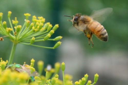 pollinator 043