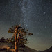 Milky Way With Andromeda Galaxy, Yosemite by Charlotte Hamilton Gibb