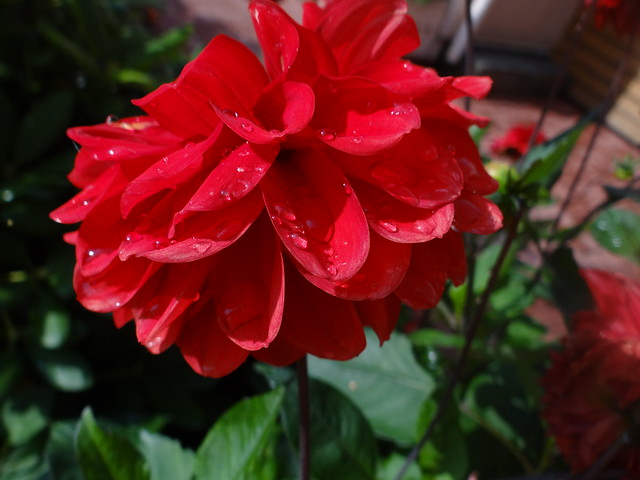 rot ist eine wunderbare farbe flickr photo sharing. Black Bedroom Furniture Sets. Home Design Ideas