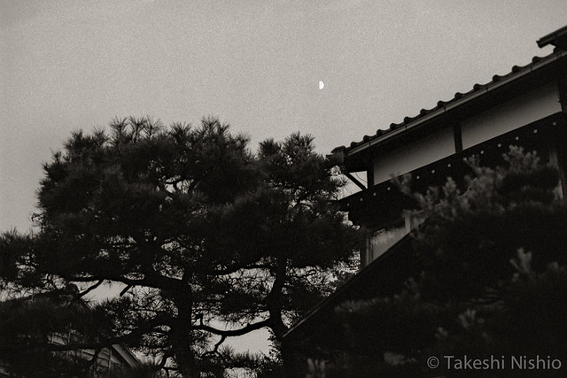 暮れ始めの月 / moon at dusk