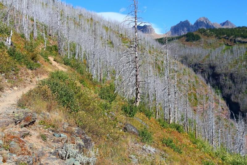 IMG_4569 The Loop Trail