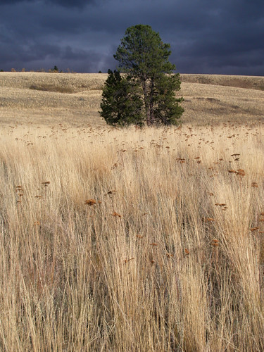 yellow grasses sway before the storm