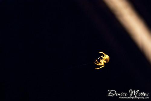 341: Spider