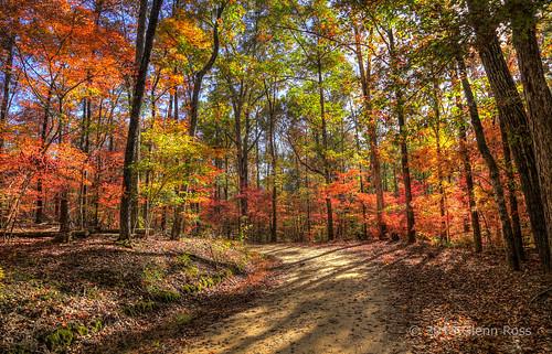 autumn color sc woods unitedstates southcarolina lynchs newberry