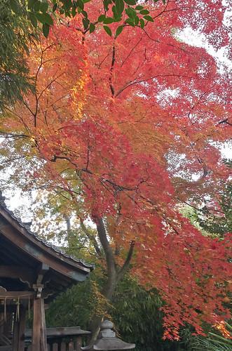 【写真】2013 紅葉 : 上御霊神社/2020-07-01/IMGP4176