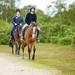 Bournemouth Horse Ryding