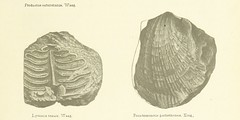 """British Library digitised image from page 163 of """"A Manual of the Geology of India ... Second edition ... largely rewritten by R. D. Oldham"""""""