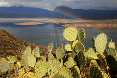 Rainbow over Theodore Roosevelt Lake, Highway 188, Arizona