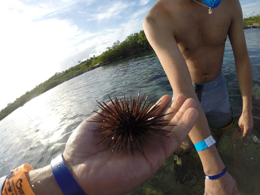 Yucatan trip photos from snorkling 11976048054_c516b2f8bf_b