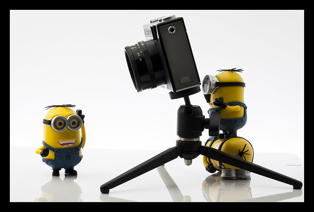 minion photography 2  Flickr - Photo Sharing!