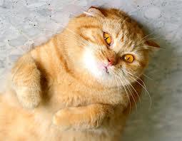 bewildered cat
