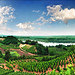 Vineyards by Katarina 2353