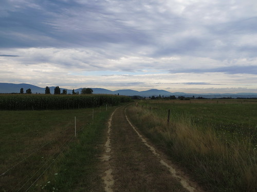 20130819 11 059 Jakobus Weg Hügel Wald Wiese