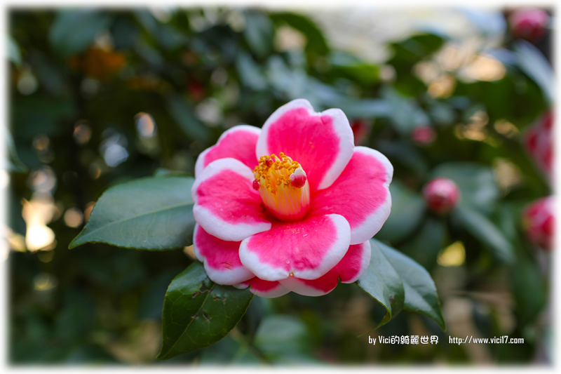 0119陽明山花卉中心017