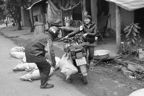 VIVRE AU VIETNAM : QUAND ON TUE LE COCHON, TOUT LE MONDE EST CONTENT... SAUF LE COCHON !! (EXPLORE)