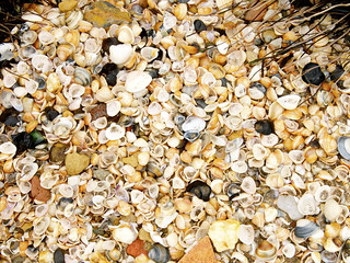 Manzanilla Sea Shells