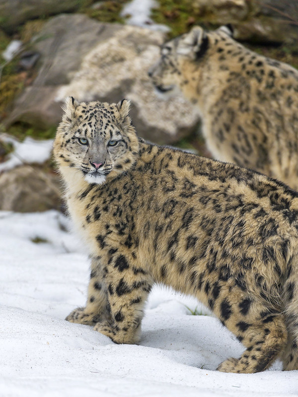 Thalia and her mom in the snow