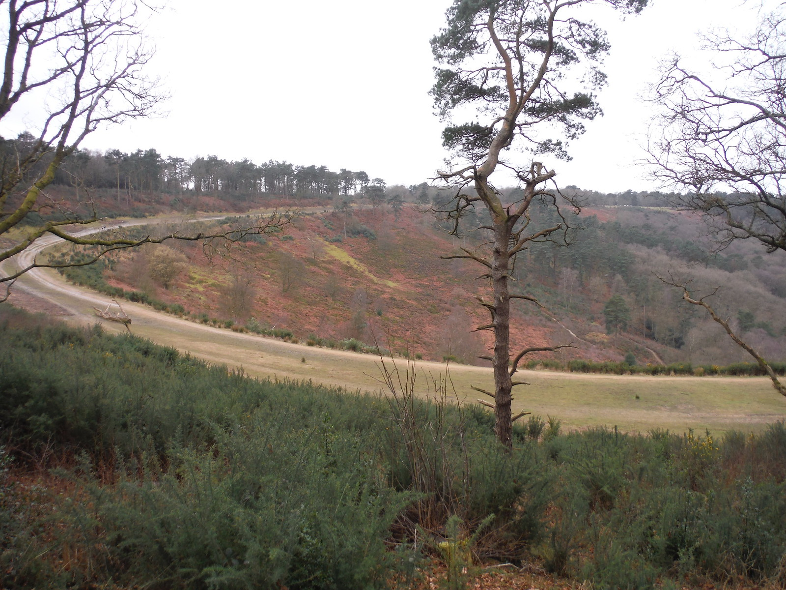 Devil's Punch Bowl and old course of the A3 SWC Walk 144 Haslemere to Farnham