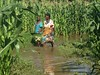 Chembe village, Traditional Authority of Pemba, Salima District.   A total of 1 827 hectares belonging to 6 419 farmers have been affected in the District.   They were either washed away or submerged in a mixture of water, sand and mud. Replanting is therefore needed. Among the most affected crops are maize, rice, cow peas, cassava and sweet potato.   For many families the floods meant losing their crops for a third consecutive time.   © COOPI/Giulia Tieni