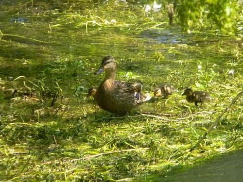 I should be so ducky ducky...