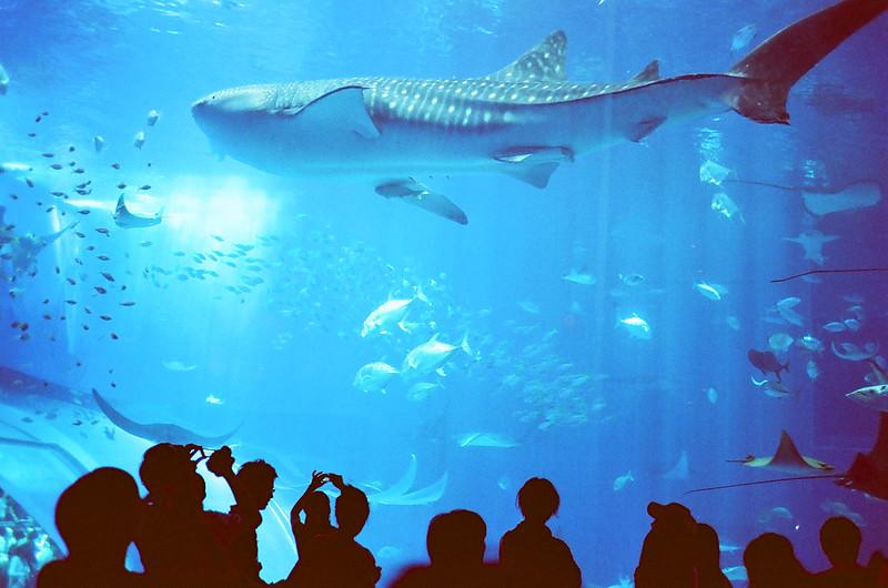 Okinawa 美之海水族館